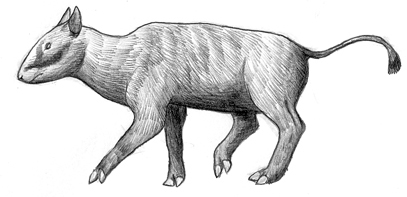 Sumatraspaka