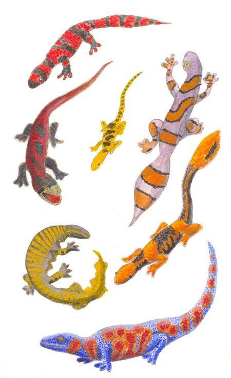 Jewel Geckos
