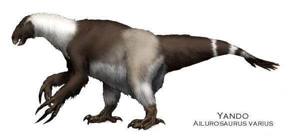 Ailurosaurus2
