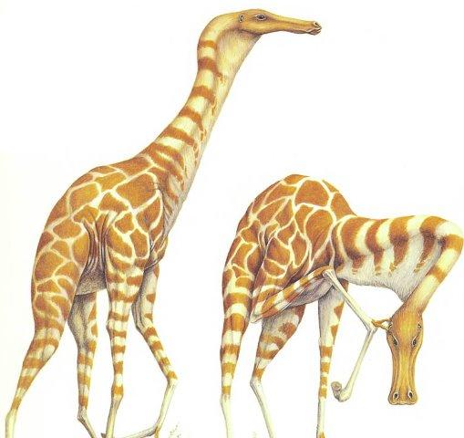 File:Herbafagus longicollum.jpg