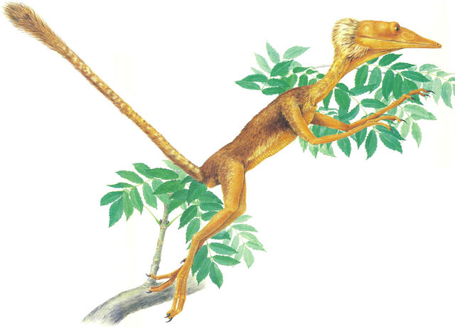 File:Tree Hopper.jpg