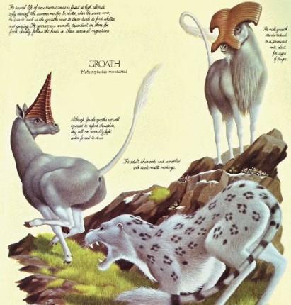 File:Hebecephalus montanus y oromustela altifera.jpg