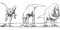 A Closer Look: The Salmonite Run