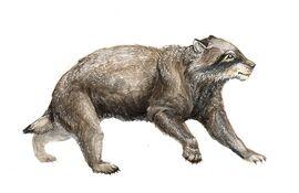 Ursicyon