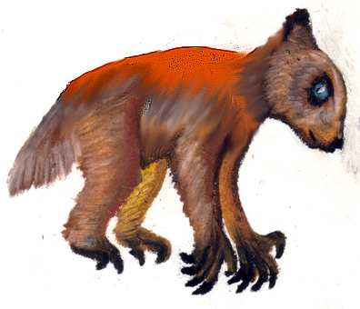 Redback teddy