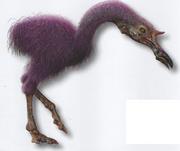 Struthiops philipkdicki male