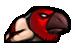 Hawkdude corpse