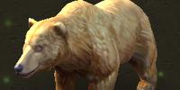 Niedźwiedź grizzly