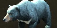 Księżycowy Niedźwiedź