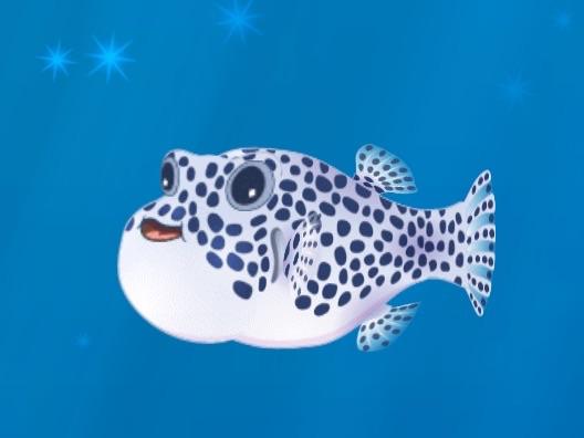 File:Baby Starry Pufferfish -3 .jpg