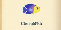 Cherubfish
