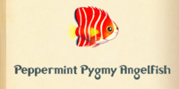 Peppermint Pygmy Angelfish