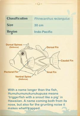 Reef Triggerfish§Aquapedia2