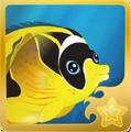 Racoon Butterflyfish§Headericon