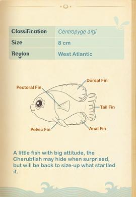 Cherubfish§Aquapedia2
