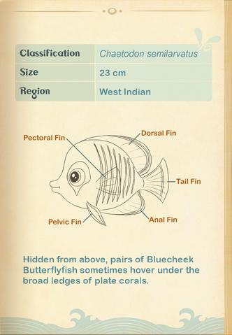 File:Bluecheek Butterflyfish§Aquapedia2.png