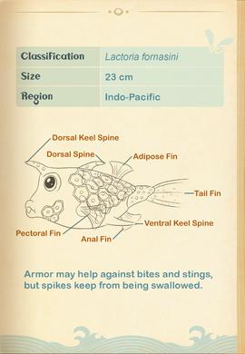 Thornback Cowfish§Aquapedia2