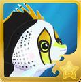 Hawaiian Butterflyfish§Headericon