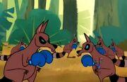 Kangaraccoons