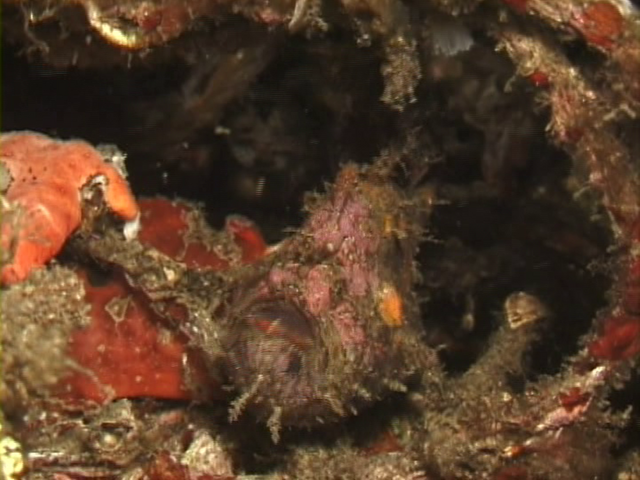 File:Case of the Sponge Bob 123.png