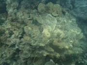Case of the Sponge Bob 152