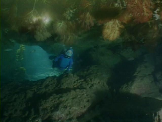 File:Case of the Sponge Bob 181.png
