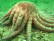 Case of the Sponge Bob 056