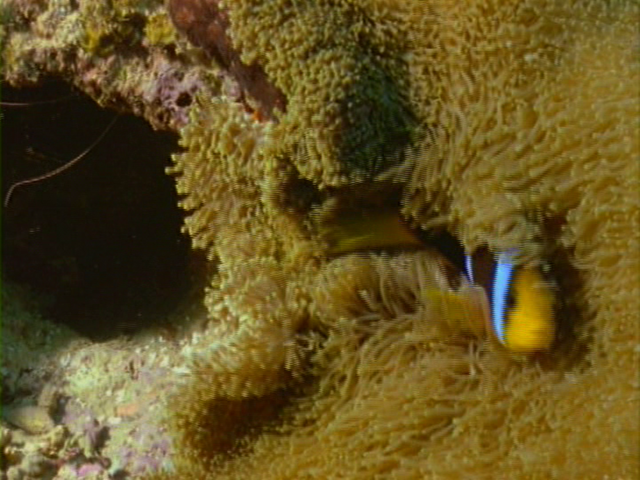 File:Case of the Sponge Bob 145.png