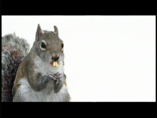 File:SandyCheeks(Squirrel).jpg