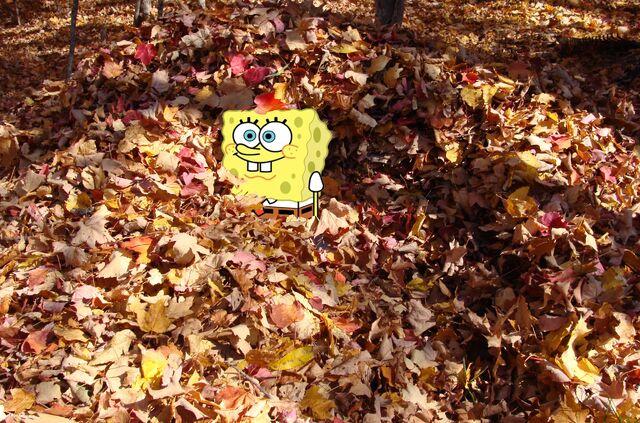 File:SpongeBob in a leaf plie.jpg