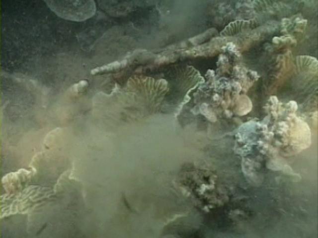 File:Case of the Sponge Bob 153.png