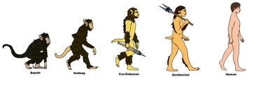 Alternate Human Evolution