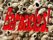 Barnacles!