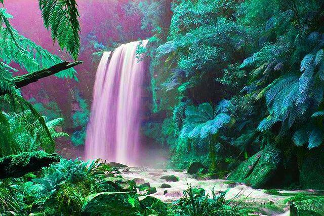 File:Jungle.jpg