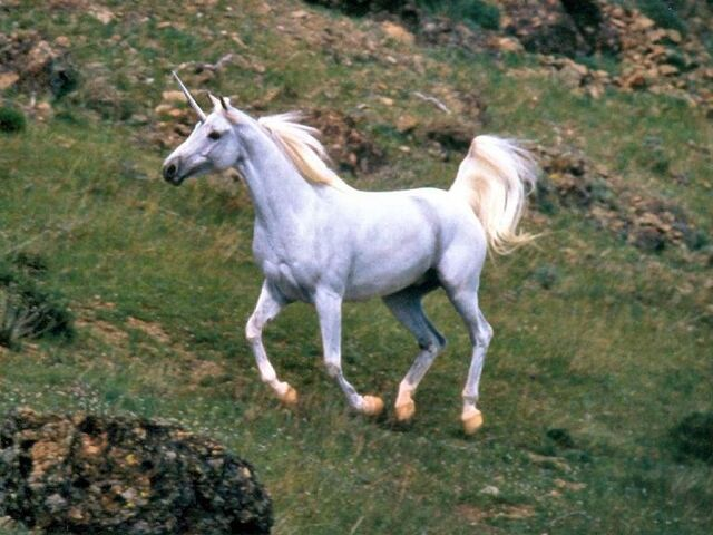 File:The Real Unicorn.jpg