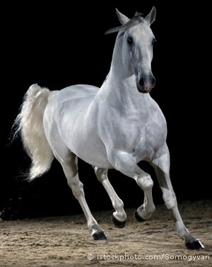 File:Horse 000008038936.jpg