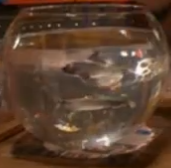 File:Miniature Sharks.png