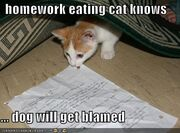 Funny pictures homework eating cat Funny cats and dogs pics-s438x324-49243-580