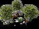 Decoration Ash Trees