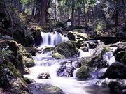 RealWorld Urivari Waterfall
