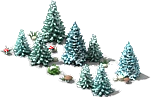 File:Blue spruce (Winter).png