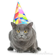 Party hat kitten2