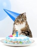 4694004-cat-happy-birthday-party