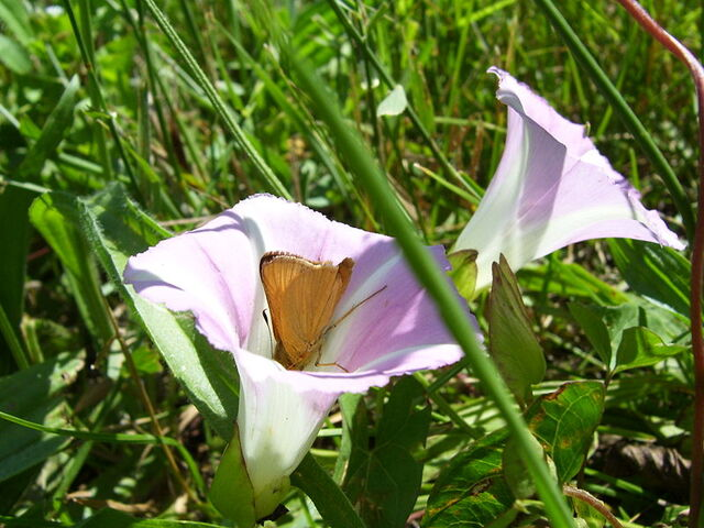 Bestand:Vlinder.jpg