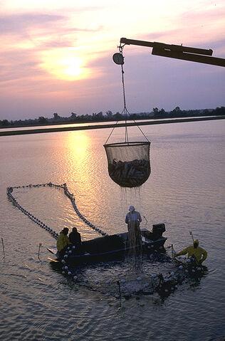 Bestand:Viskwekerij.jpg