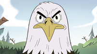 S2E10 Bald eagle with an angry look
