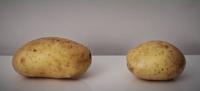 Potato-Killgar and Potato-Hogstrong