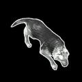 Dog SC2 DevRend1.png