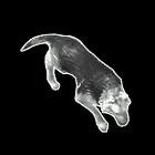 File:Dog SC2 DevRend1.png