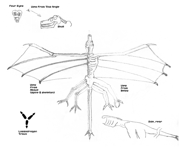 File:LongWingLossodragon-800w.png